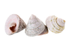 Sea shells arranged isolating on a white background Royalty Free Stock Photos