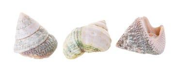 Sea shells arranged isolating on a white background.  stock image