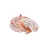 Sea shells arranged isolating on a white background.  stock photography