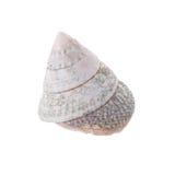 Sea shells arranged isolating on a white background.  stock photos