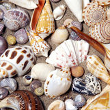 Sea shells in arrangement. Shells from the beaches of the world Royalty Free Stock Photo