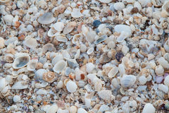 Sea shells as background. Many sea shells as background Royalty Free Stock Photography