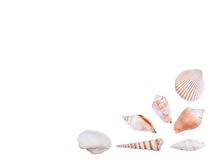 Sea shells as an decoration of a page corner isolated Royalty Free Stock Photos