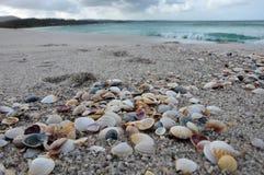 Free Sea Shells At The Beach Royalty Free Stock Photos - 127632618