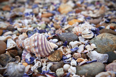 Sea Shells background. Close up of a beach of colourful seashells Royalty Free Stock Photo