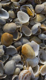 Sea shells background. Abstract background of pile of sea shells Royalty Free Stock Photos