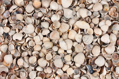 Sea shells, background Royalty Free Stock Images