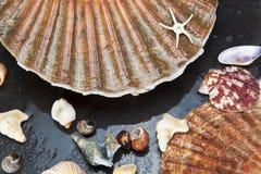Sea shells background Stock Image