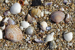 Sea shells background Royalty Free Stock Images