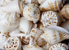 Sea Shells Background Stock Images