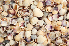Sea shells background close up Stock Photo