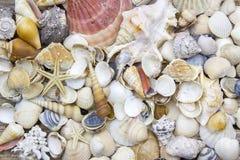 Sea shells background Royalty Free Stock Image