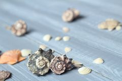 Sea shells background image on light wooden background stock photography