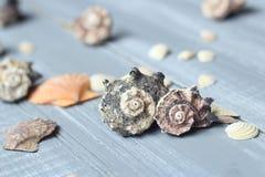 Sea shells background image on light wooden background royalty free stock image
