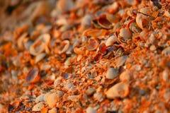 Sea shells background macro shot of beautiful seashells in pieces Stock Photo