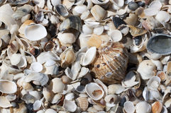 Sea shells background - RAW format royalty free stock photography
