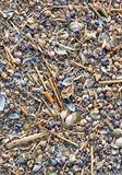 Sea shells background Stock Photography