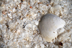 Sea shells background. Pattern background Royalty Free Stock Photography