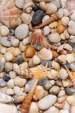 Sea shells background. Royalty Free Stock Photography