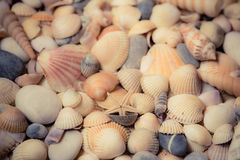 Sea shells background. royalty free stock image