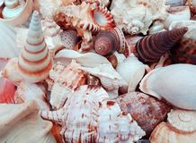 Sea shells background with shads of orange and white. background, wallpaper. stock image