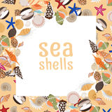 Sea shells background with square frame. And text. Vector illustration Stock Images