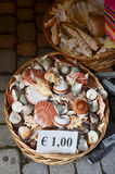 Sea shells in a basket Royalty Free Stock Photos