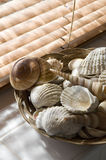 Sea shells in bathroom Stock Images