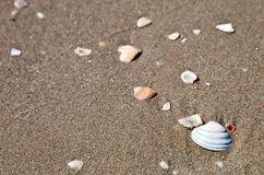 Sea shells on the beach. Some seashells on the beach stock images