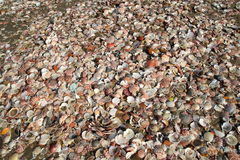 Sea Shells on Beach Royalty Free Stock Photos