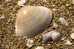 Sea shells on beach Royalty Free Stock Photography
