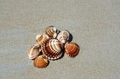 Sea shells on a beach Royalty Free Stock Photos