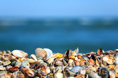 Sea shells on the beach Stock Images