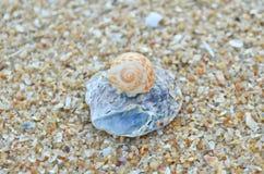 Sea shells on the beach Stock Image