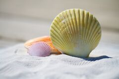 Sea shells on beach Stock Images
