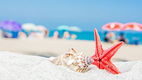 Sea shells with beach atmosphere and multicolored umbrellas Royalty Free Stock Photos