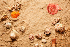Sea Shells On The Beach Stock Photography