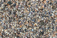 Sea shells on a beach. Background of sea shells and small pebbles on a beach Stock Photos
