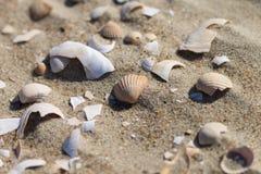 The sea shells royalty free stock image