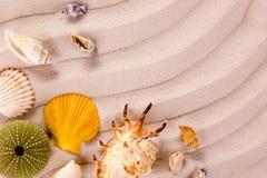 Sea shells on the beach Stock Photos