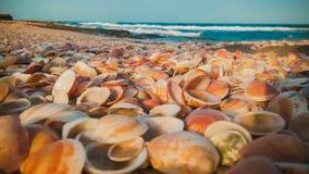 Sea shells on the beach Royalty Free Stock Photos