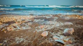 Sea shells on the beach Royalty Free Stock Photography