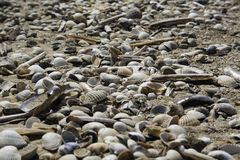 Sea shells on beach royalty free stock photo