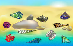 Sea shells on the beach. Sea beach with colorful shells and stones Royalty Free Stock Photo