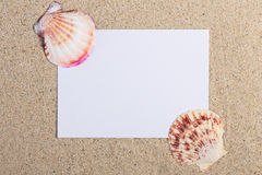 Sea €‹shells beach concept.note with seashells in the sand Royalty Free Stock Photo