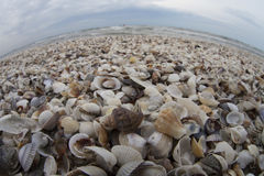 Sea of shells. Beach full of shells with curved horizon line stock image