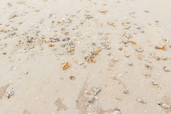 Sea shells on the beach and lots of holes of ghost craps when low tide can be used as background Royalty Free Stock Photo