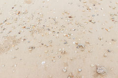 Sea shells on the beach and lots of holes of ghost craps when low tide can be used as background Stock Photo