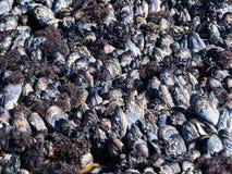 Sea shells on a beach Royalty Free Stock Photo