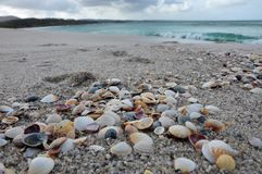 Sea shells at the beach. With the ocean in the background royalty free stock photos